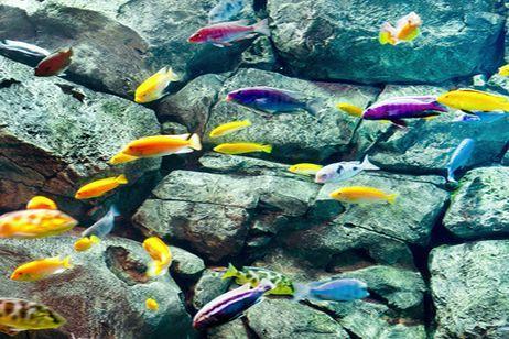 Peces tropicales para acuario cuales se adaptan mejor for Lista de peces tropicales para acuarios
