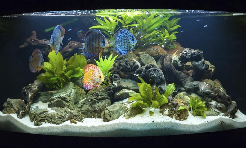 Cuanto viven los peces esperanza de vida y factores que for Peceras con peces