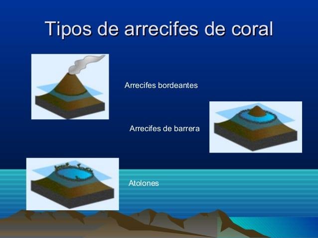 Tipos de arrecifes coralinos